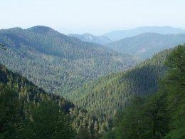 Ormanlar ve Anıt Ağaçlar